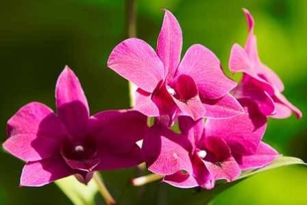 Những loài hoa xinh đẹp trên đất Úc