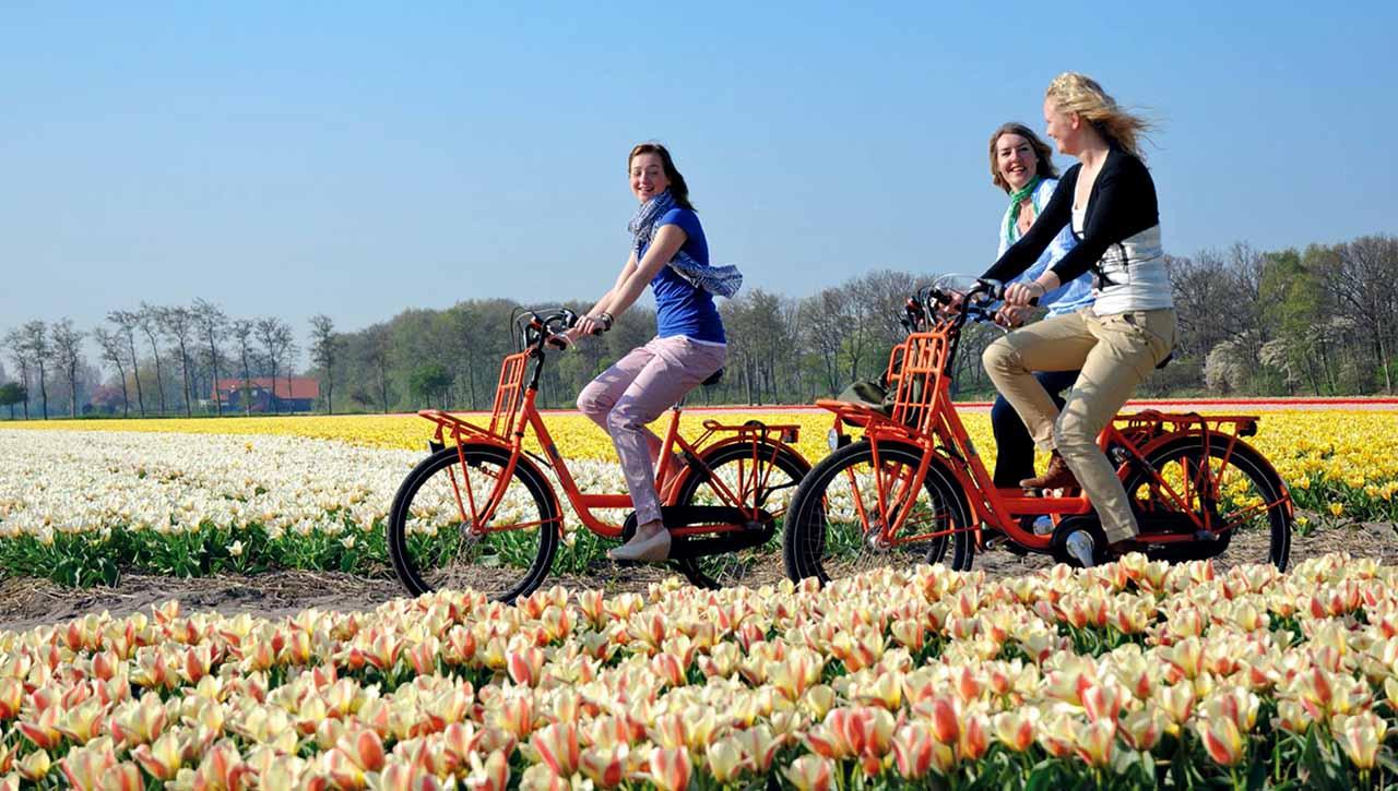 10 trường đại học tốt nhất ở Hà Lan năm 2017