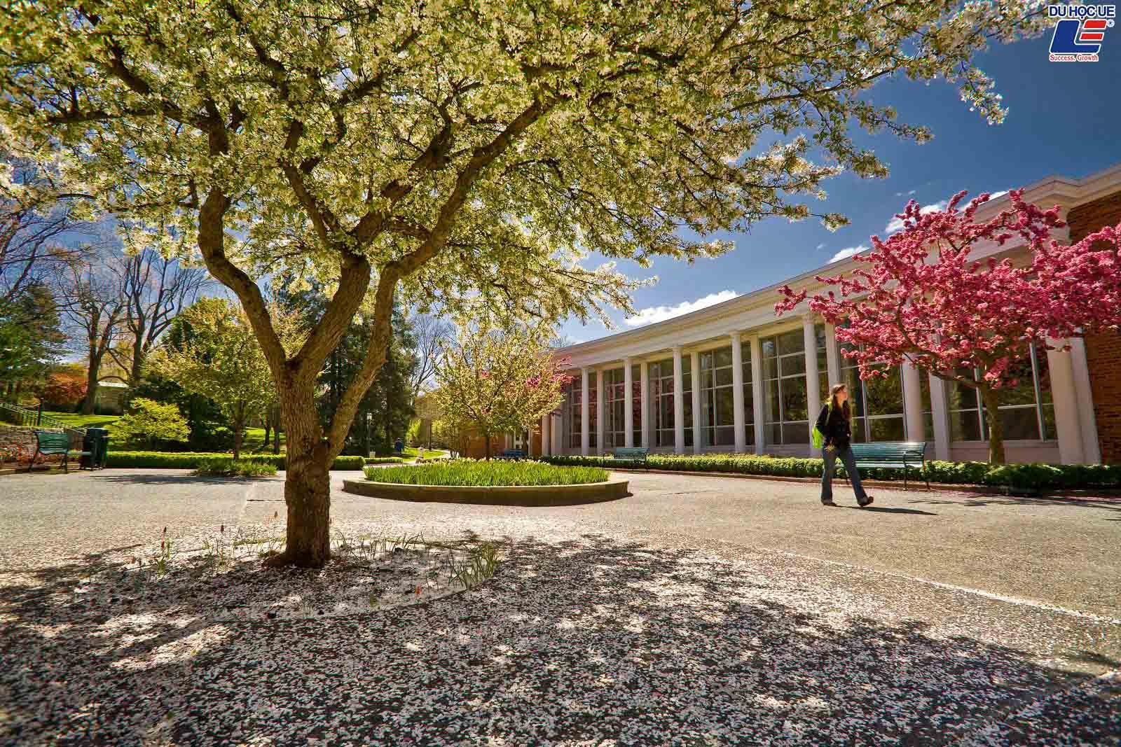 Cơ hội săn học bổng tại Allegheny College - Trường cao đẳng thuộc 1% những trường lâu đời nhất nước Mỹ 2