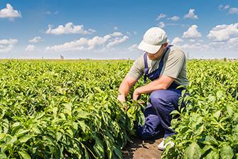 Danh sách học bổng du học chuyên ngành nông nghiệp 2019