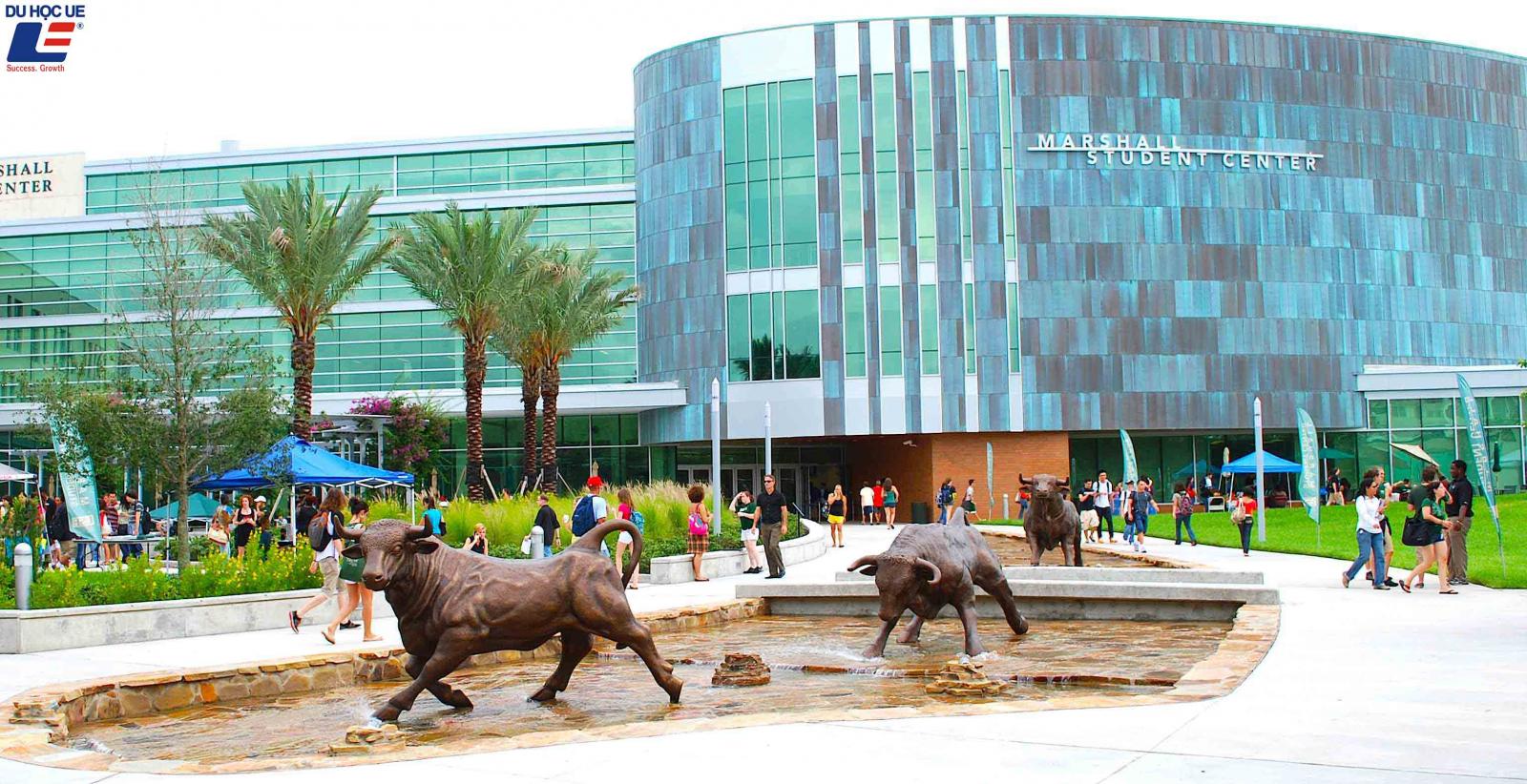 Du học dễ dàng tại Mỹ với học bổng từ University Of South Florida 3