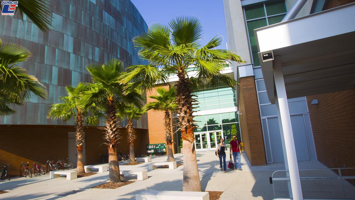 Du học dễ dàng tại Mỹ với học bổng từ University Of South Florida 2
