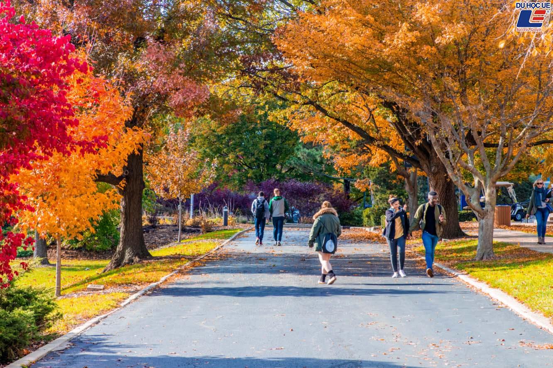 Rinh ngay học bổng $20.000 từ Elmhurst College - Sự lựa chọn hoàn hảo cho những ai muốn chinh phục học bổng du học Mỹ