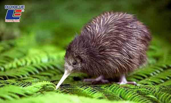 Tại sao nên đến New Zealand để du học