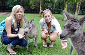 Queensland - Miền đất hứa của những ước mơ du học Úc